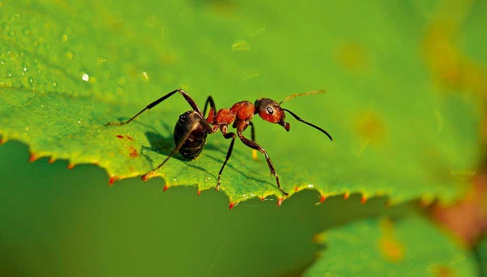 Muurahaisilla on väliä